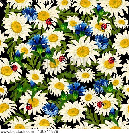 Pattern With Daisies And Cornflowers.cornflowers, Daisies And Ladybugs On A Black Background In A Ve