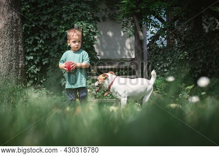 Small kid played with white dog puppy breed jack russel terrier on summer backyard. Happy childhood concept