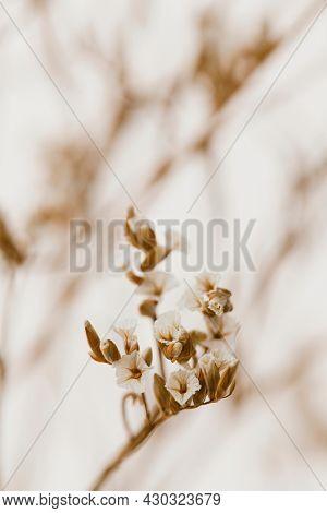 Dried white statice flower macro shot