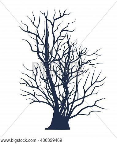 Bare Tree Without Leaves. Detailed. Dark Silhouette. Dense Crown With Many Small Branches. Or Close-