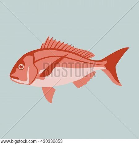 Snapper Fish, Vector Illustration, Flat Style, Side View