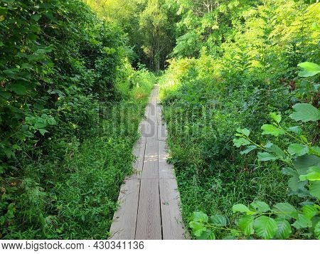 Boardwalks Of The Wetlands Are Nature Walk Of Many Lives