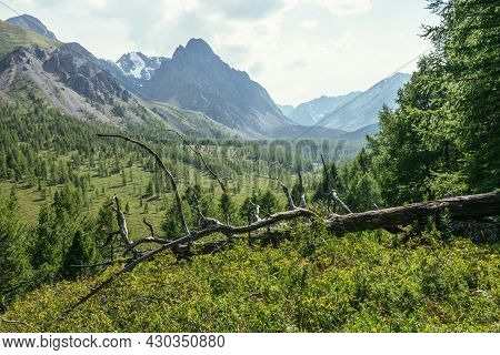 Sunny Alpine Scenery With Dry Snag Among Green Grasses With View To Great Sharp Mountain Top. Scenic
