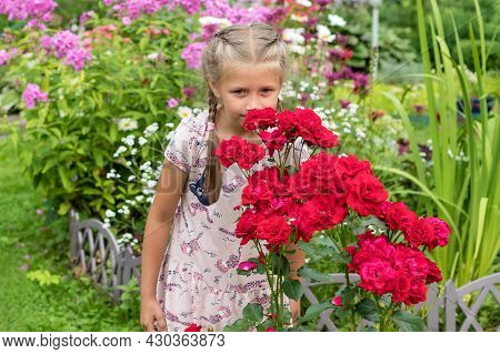 A Little Pretty Girl Stands In The Garden By A Flowering Bush Of A Red Tall Rose Enjoying The Scent