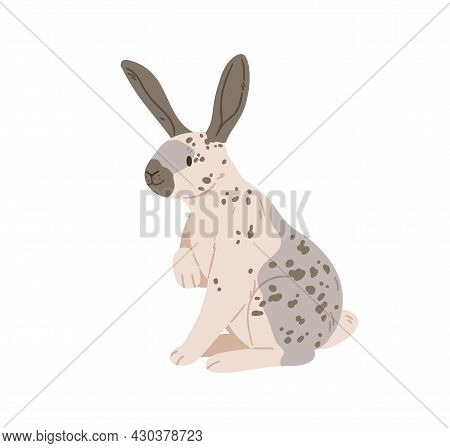 English Checkered Breed Of Giant Rabbit With Spots On Fur. Spotty Bunny Sitting. Cute Domestic Anima