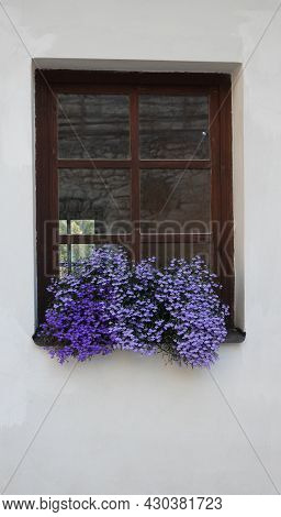 Old Window With A Brown Frame With Blue Lobelia Disambiguation Flowers