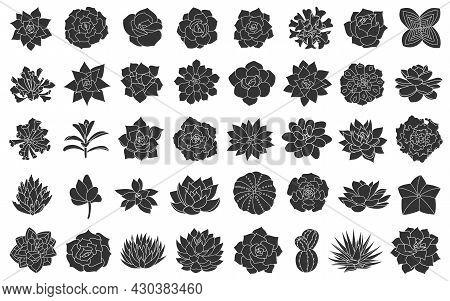 Succulent Plant Vector Illustration, Set From Silhouette Echeveria. Desert Flower Hand Drawn On Whit