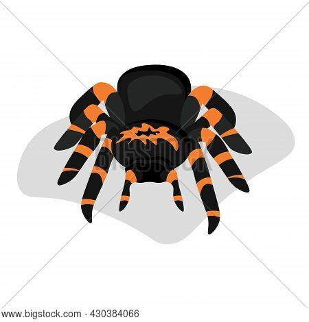 Cartoon Style Tarantula Spider, Dark Arachnid With Bright Orange Stripes Vector Illustration