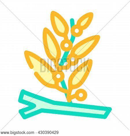 Sargassum Seaweed Color Icon Vector. Sargassum Seaweed Sign. Isolated Symbol Illustration