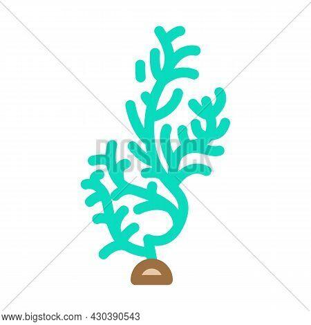 Cladophora Glomerata Seaweed Color Icon Vector. Cladophora Glomerata Seaweed Sign. Isolated Symbol I
