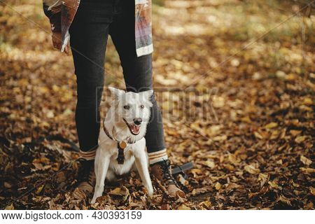 Cute Dog Sitting At Owner Legs In Autumn Woods. Traveling With Pet, Loyal Companion. Adorable White