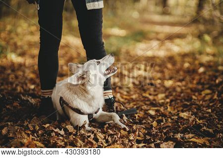 Cute Dog Sitting At Owner Legs In Autumn Woods. Traveling With Pet, Loyal Companion. Stylish Young H