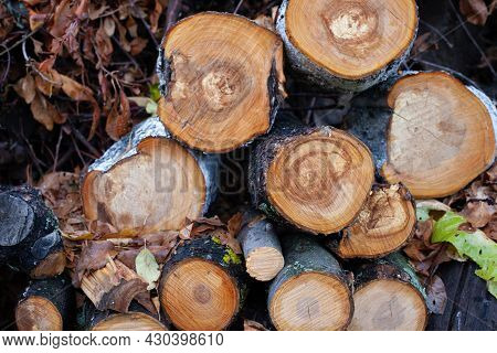 Felled Trees And Branches In Forest. Sawn Tree Trunks Lie On Top Of Each Other, Background Of Wet Au