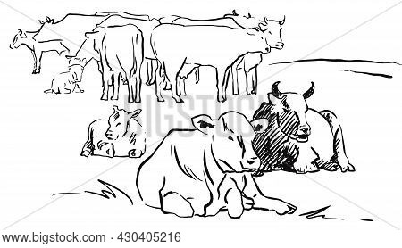 Sketcn Herd Of Cows On Meadow Line Hand Drawn Vector Illustration