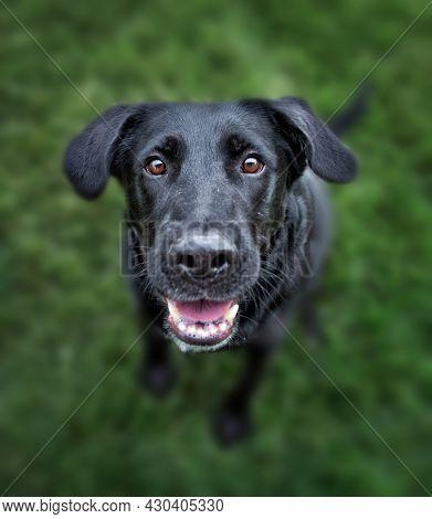 wide angle photos of a cute dog outside