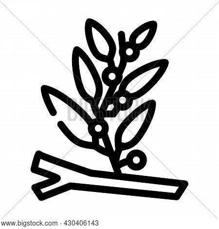 Sargassum Seaweed Line Icon Vector. Sargassum Seaweed Sign. Isolated Contour Symbol Black Illustrati