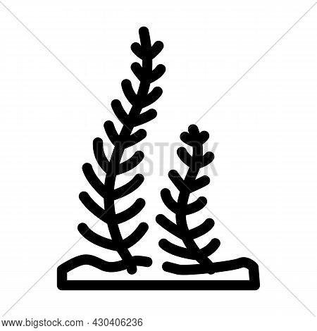 Caulerpa Taxifolia Seaweed Line Icon Vector. Caulerpa Taxifolia Seaweed Sign. Isolated Contour Symbo
