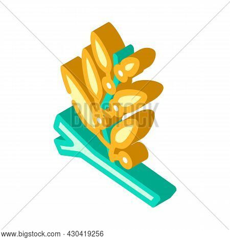 Sargassum Seaweed Isometric Icon Vector. Sargassum Seaweed Sign. Isolated Symbol Illustration