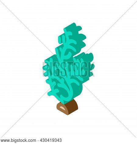 Cladophora Glomerata Seaweed Isometric Icon Vector. Cladophora Glomerata Seaweed Sign. Isolated Symb