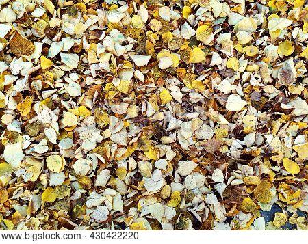 Fallen Yellow Autumn Leaves Covered The Old Asphalt Coating. Small Foliage. Plants. Autumn. The Foli