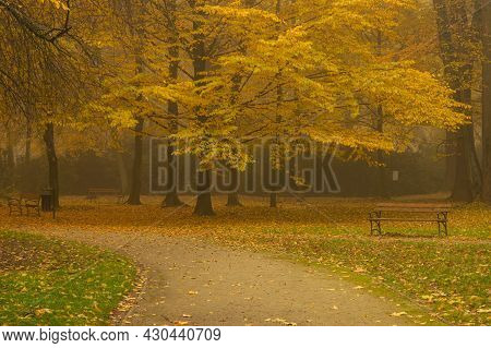 Manor Park In The City Of Ilowa, Poland In The Fall. There Are Yellow Leaves On The Trees. Fog Is Ri