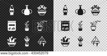 Set Bottle Of Water, Vase, Flower In Vase, Cactus Peyote Pot, Glass Bottle, Plant Hanging, Pack Full