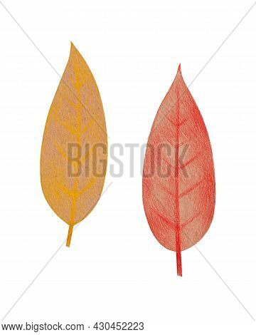 Hand Drawn Yellow And Red Leaves With A Rough Texture. Isolated Plant Drawing With Colored Pencils O