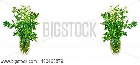 Bouquet Of Wormwood Plants Bitter On A White Background.