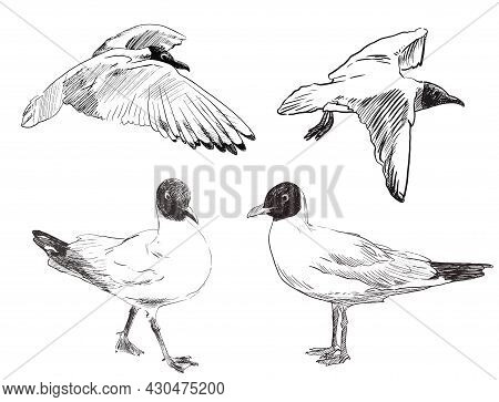 Set Of Sketch Seagull Hand Drawn Vector Doodle Illustration