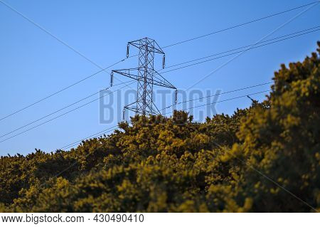 Beautiful Early Morning View Of Power Lines With Electricity Transmission Pylon And Flowering Yellow