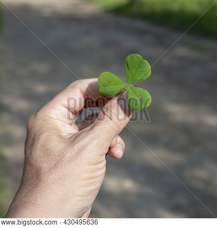 Clover Leas For Green Background With Shamrock Onhand, Green Background With Hand Holding Three-leav