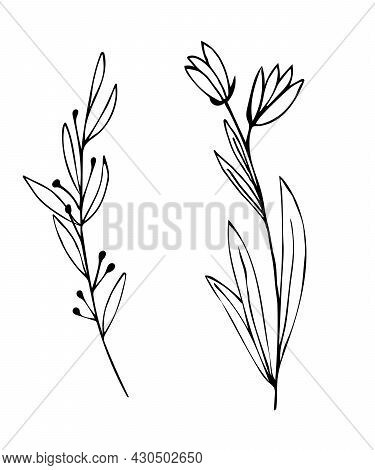 Botanical Linear Leaf Set. Abstract Minimalist Leaves Collection, Creative Herbal Art. Hand Drawn We