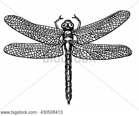 Dragonfly Black And White Sketch With Delicate Wings Vector Illustration Black And White Sketch. Dra