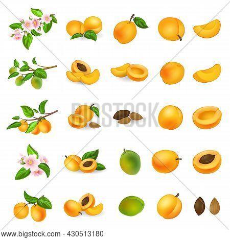Apricot Icons Set Cartoon Vector. Confiture Jam. Nectarine Peach