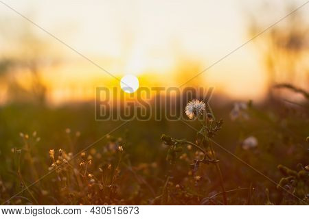 Wildflowers At Sunset. Abstract Sunny Summer Background. The Orange Round Sun In Defocus Sets Below