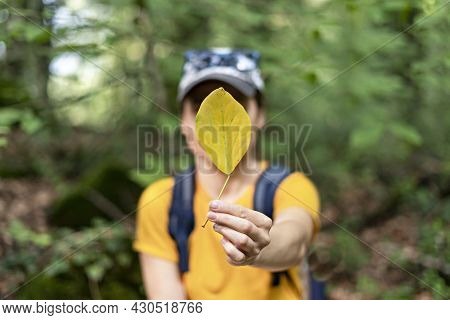 Young Woman In A Yellow T-shirt In Defocus Holding An Autumn Fallen Leaf In Front Of Her Face In For