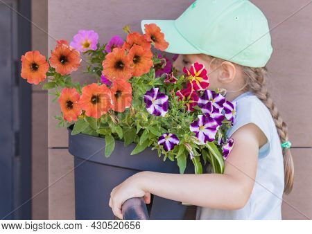 A Little Girl With Pigtails And A Cap Plunged Her Face Into A Flowerpot With Petunias And Sniffs The