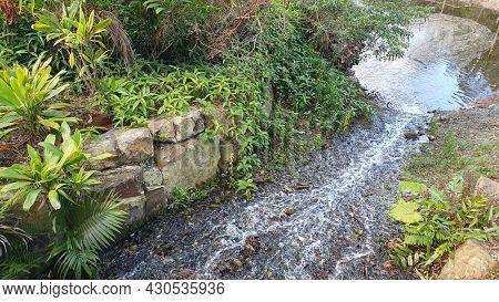 Pebbled Stream,  Mt Cootha Botanical Gardens, Brisbane Australia