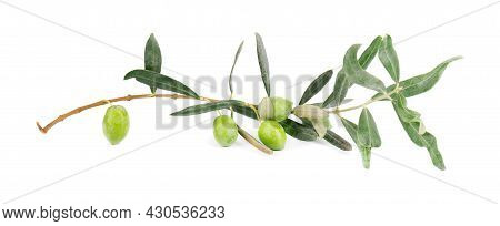 Olive Branch Isolated On White Background. Green Olives With Leaves.