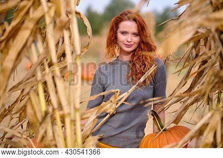 Beautiful woman harvesting pumpkins. autumn outdoor
