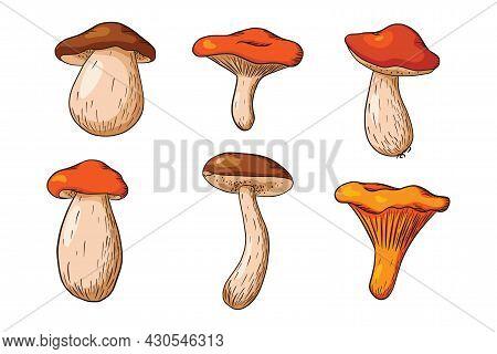 Forest Mushroom Set. Collection Of Hand Drawn Edible Mushrooms. White Mushroom, Russula, Boletus, Ch