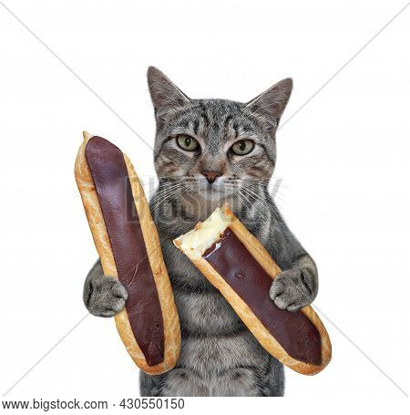 A Gray Cat Is Eating Chocolate Eclairs. White Background. Isolated.