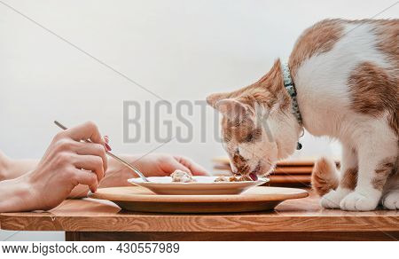 Small White And Brown Cat Eating From Plate On Table With Remains Of Chicken, Woman Hand With Fork O