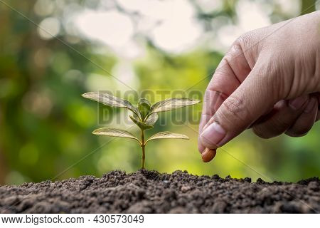 Hands Are Planting Seeds In Soil And Plant Growth And Planting By Hand In Plant Growth Concept And F
