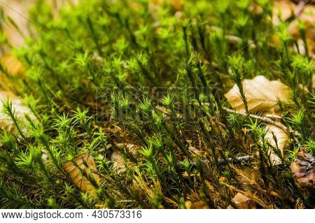 Close-up Of Moss In The Forest