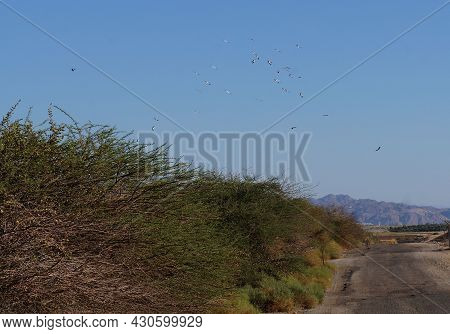 View Of Migrating Birds In The Sky In Fall Upon Eilat