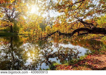 Oak Tree Reflected In Water In Alexander Park In Fall, Pushkin (tsarskoe Selo), Saint Petersburg, Ru