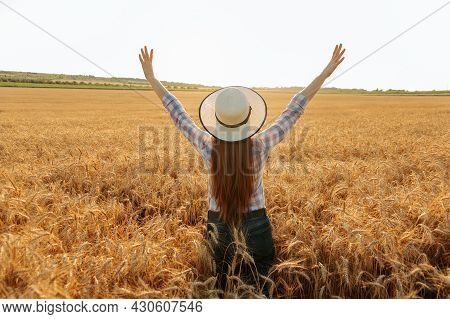Rear View Of Female Farmer With Hat On Head In Golden Wheat Field At Sunset. Harvest Time Sunny Summ