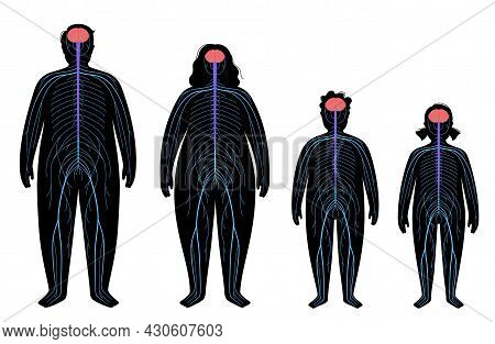 Central Nervous System. Nerves Send Electrical Signals To And From The Brain And Spinal Cord. Cns An