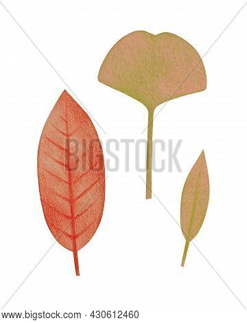 Hand Drawn Red And Green Leaves With A Rough Texture. Isolated Plant Drawing With Colored Pencils On